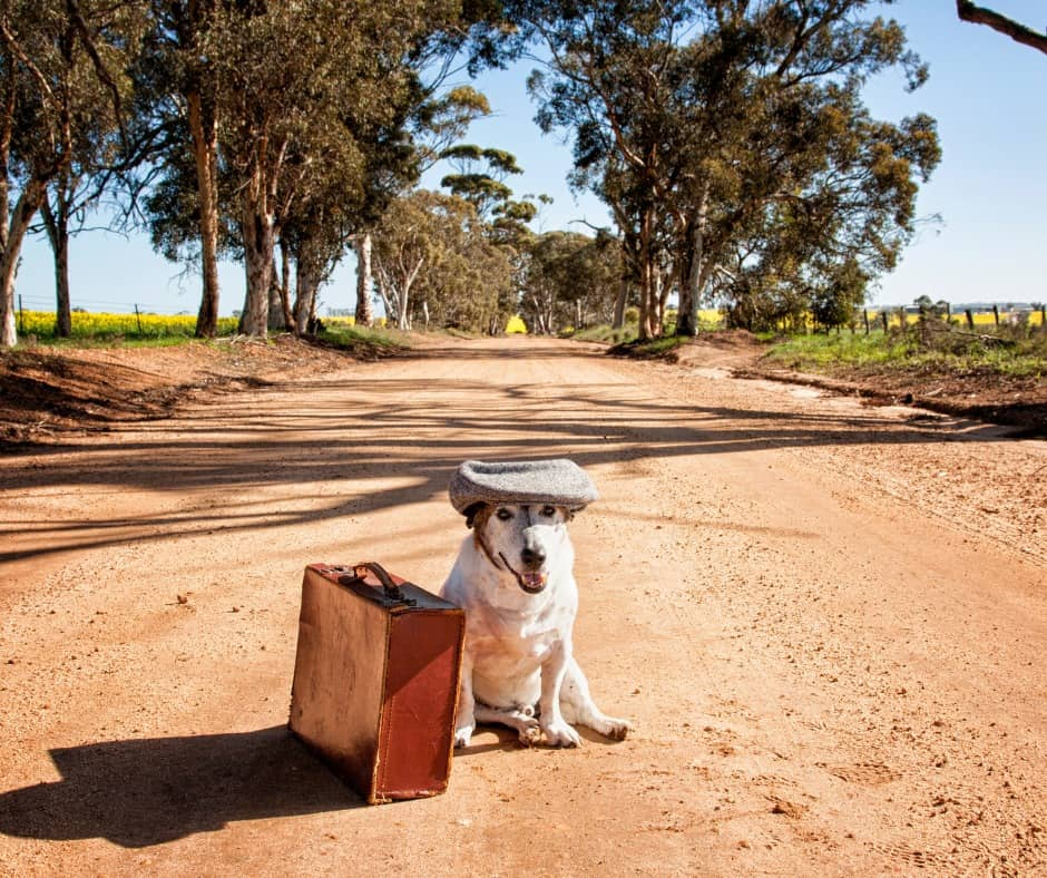 dogs travelling