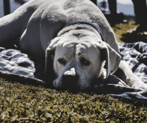 urinary problem in dogs